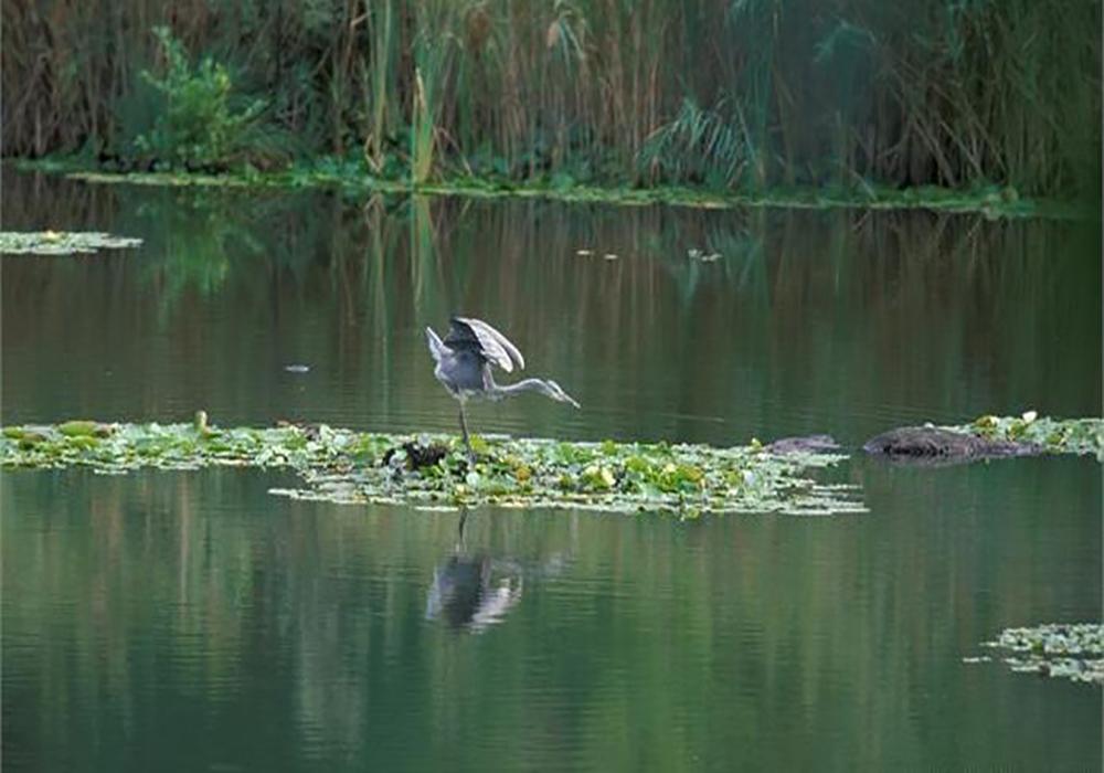 Biotopo Lago Pudro